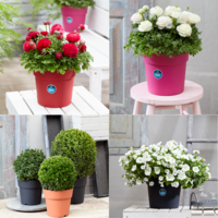 Desch Plantpak introduces two new ornamental pots: 'MAYCA' and 'IMCA Grow&Go'